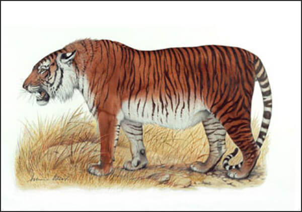 essay on save our tigers wikipedia